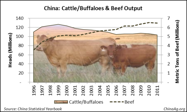 China Cattle Bovine Beef Production